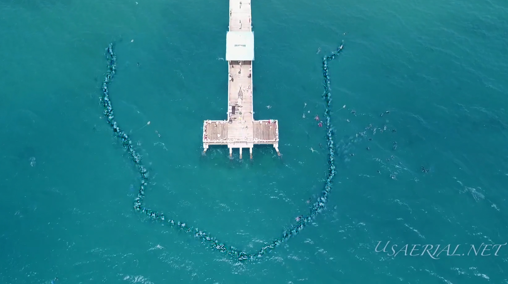 World Record Attempt Longest Human Chain Underwater